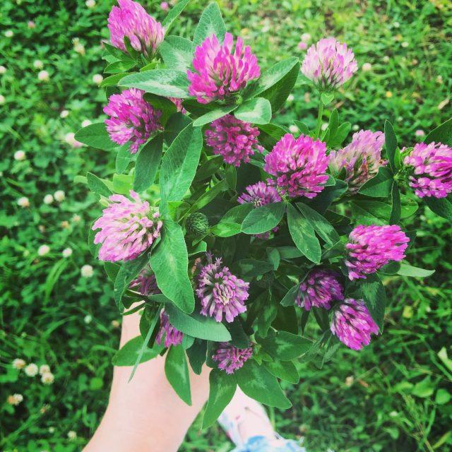 Moe zrobi hydrolat koniczynowy! lato summer flowers