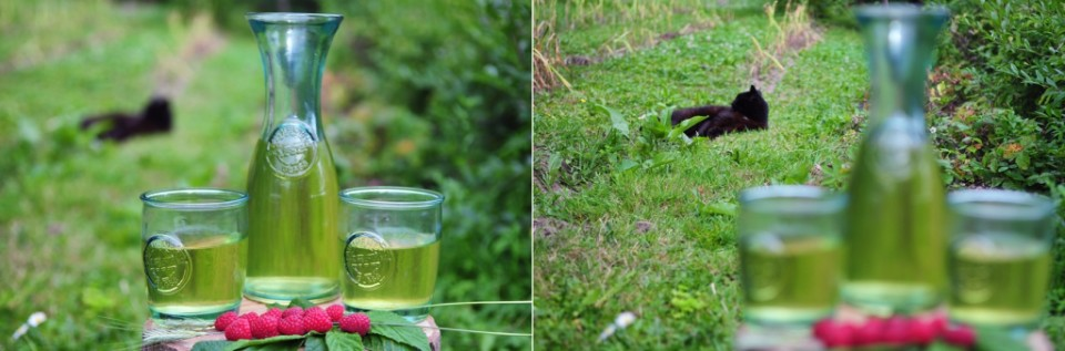 zielona herbata na lato z kocicą w tle