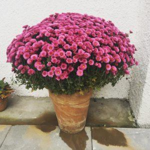 Na starość mi odbija i zakochuję się w różu!  #pink #pinkpower