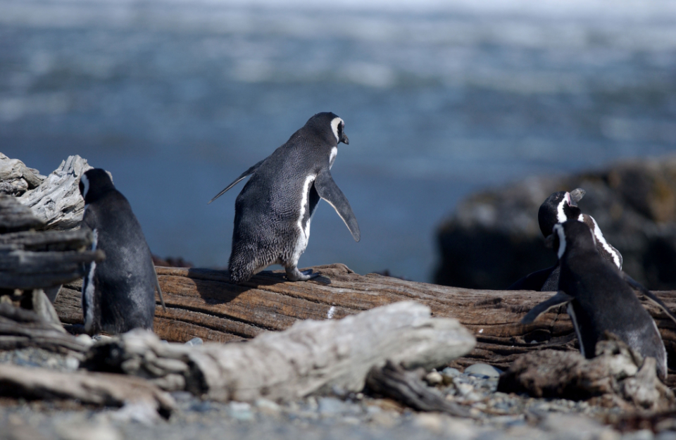 Gdzie jest Tata - Antarktyda, Przylądek Horn i Cieśnina Magellana (11)