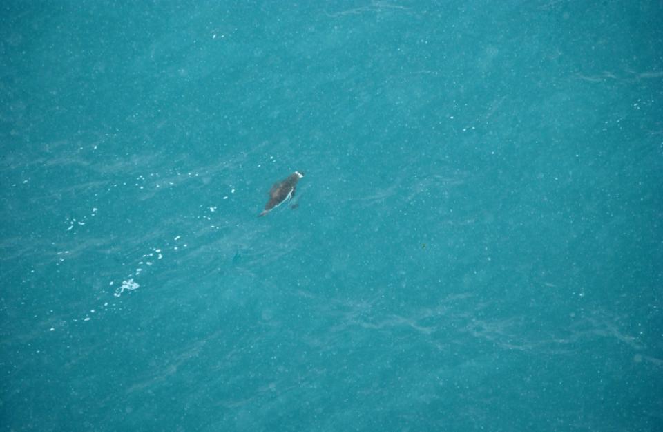 Gdzie jest Tata - Antarktyda, Przylądek Horn i Cieśnina Magellana (2)