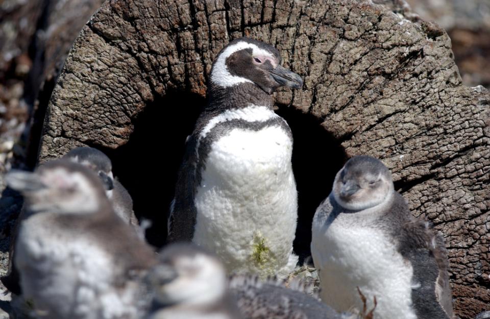 Gdzie jest Tata - Antarktyda, Przylądek Horn i Cieśnina Magellana (22)