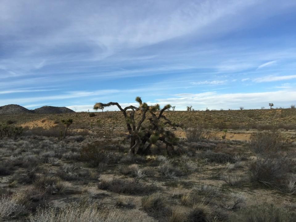 Mojave Desert_1