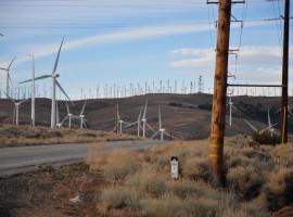 Mojave Desert_13