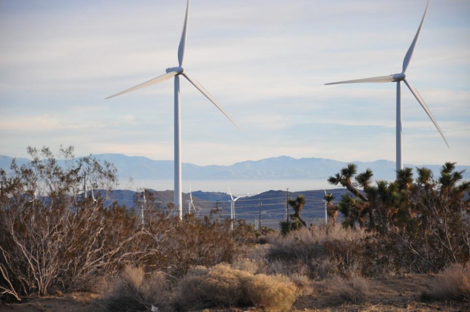 Mojave Desert_15